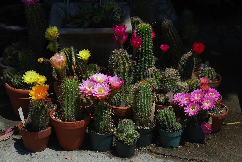 Фото цветов суккуленты цветущие